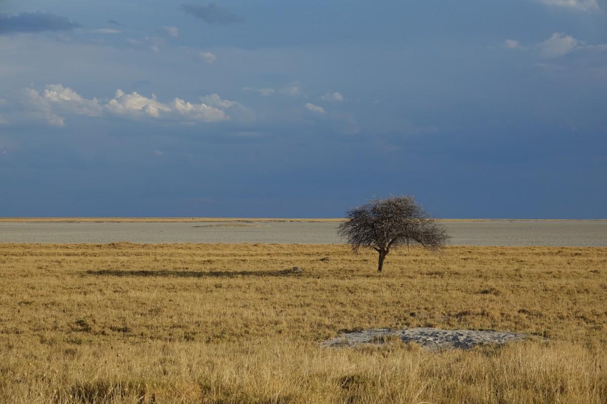 Poušť Kalahari, místo, kde prý nic není